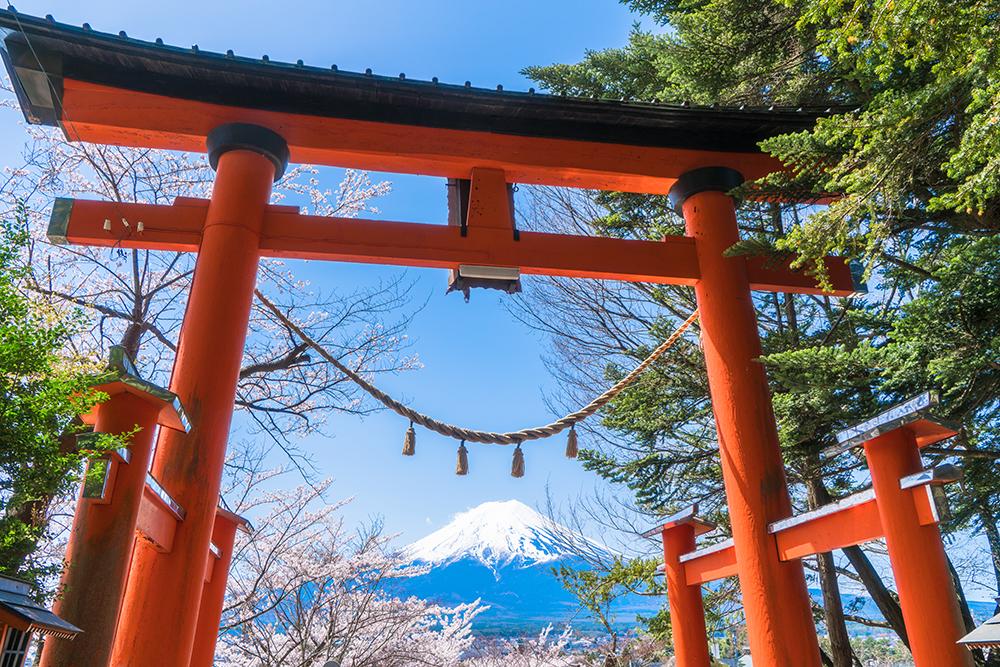 富士山と鳥居【春の新倉山浅間公園】