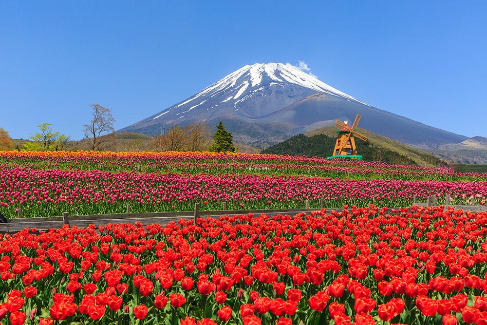富士山_ぐりんぱ