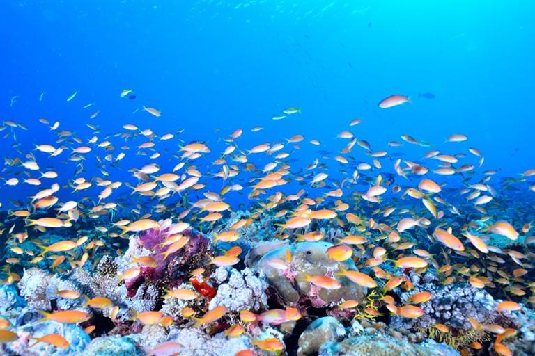 海の中の珊瑚(サンゴ)礁の役割って?サンゴ礁を守るべき理由とは?