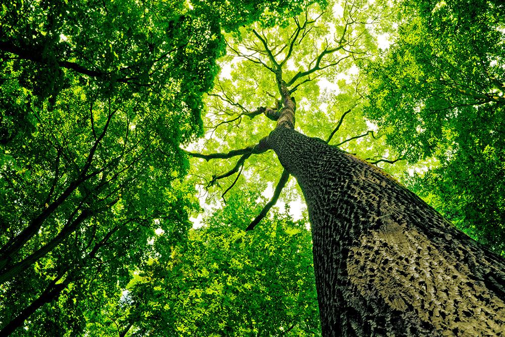 植樹・植林をする上で知っておきたい針葉樹林、単層林の知識