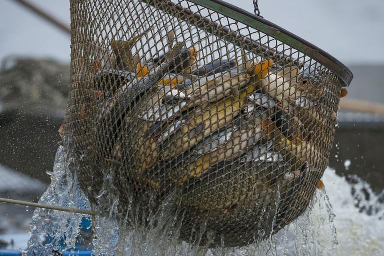 魚の「乱獲・乱売・乱食」問題。日本人は魚を食べ過ぎているの?
