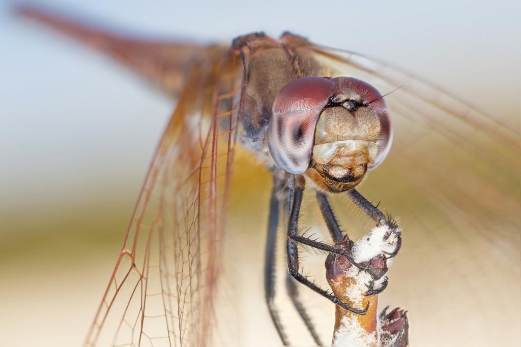 知っておきたい昆虫の15の知識