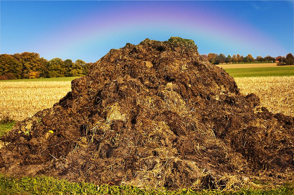 肥料だけじゃない!糞の様々なサイクル事例